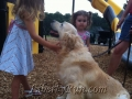 Patton-golden-retriever-puppies-for-sale