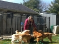 Suzanne-Golden-Retriever-Breeder-image