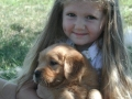 caroline-golden_retriever_breeders