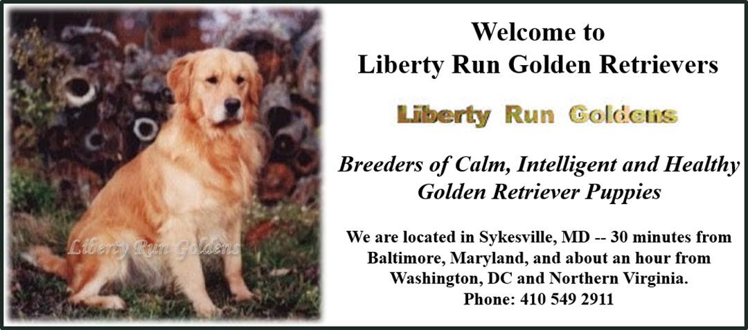 Liberty Run Golden Retrievers - Breeders of healthy