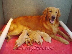 Liberty Run's April and her babies.