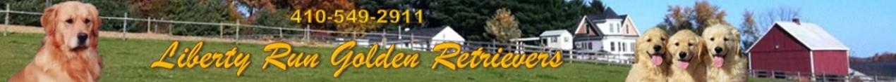 Liberty Run Golden Retrievers